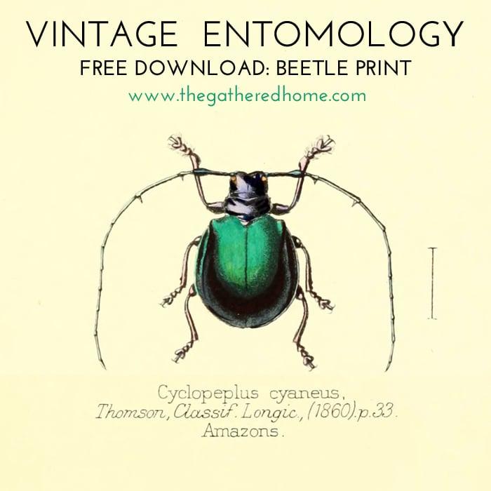 Vintage Entomology Free Download Beetle Print 2
