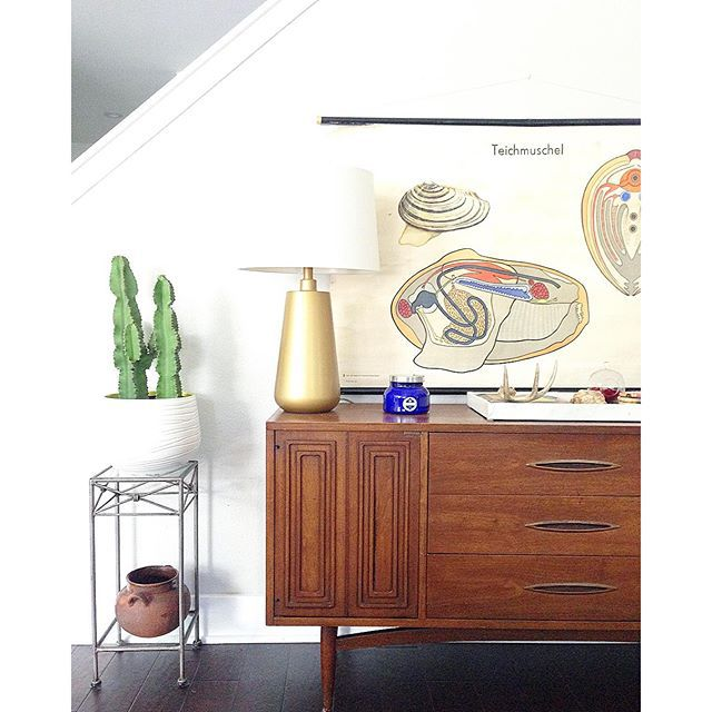 Thrift Score Thursday feature vintage mussel educational chart via themagpiecollective