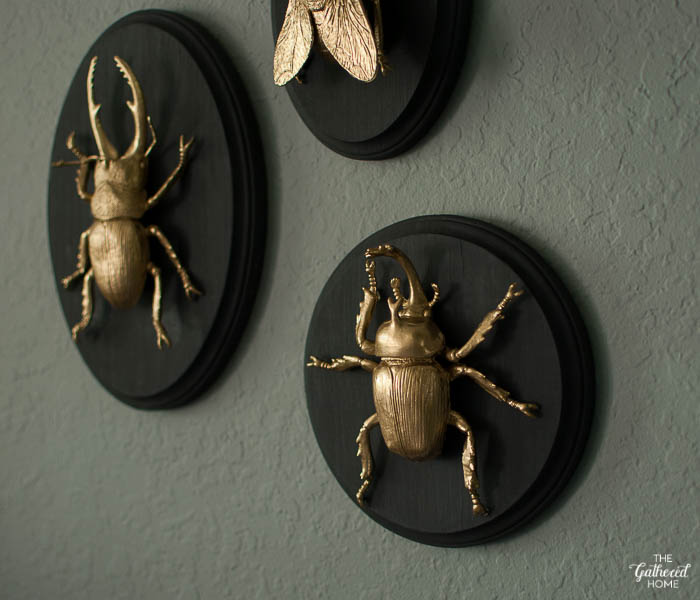 DIY Gilded Insect Entomology Taxidermy Plaques-3