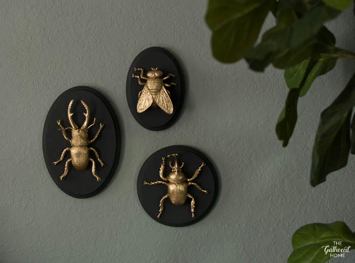 DIY Gilded Insect Entomology Taxidermy Plaques